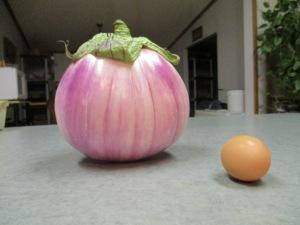 Egg Plant and Egg