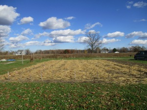 The 2015-2016 garlic field planted and mulched.