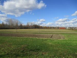 The back field is mowed.