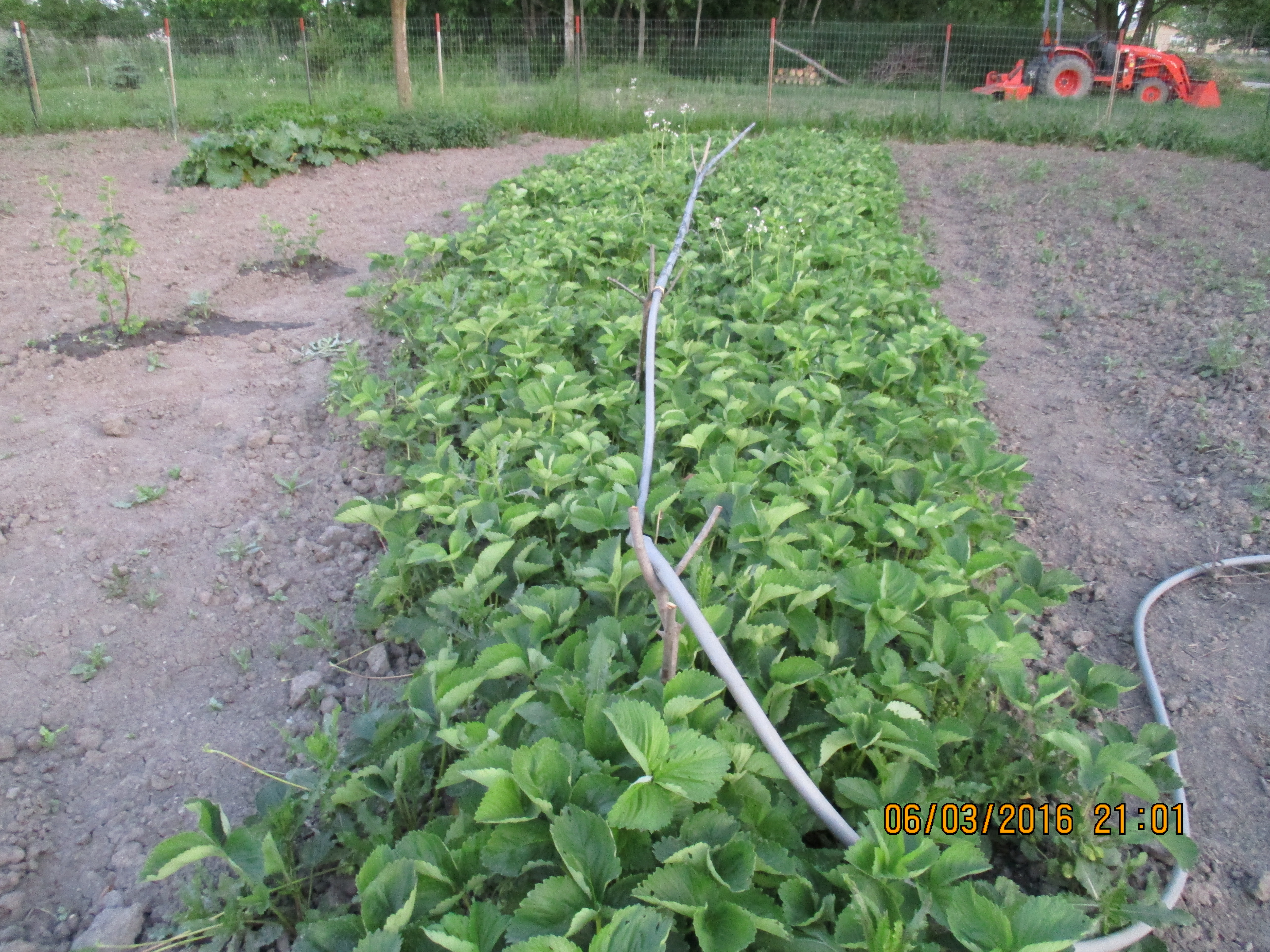 Our Off Grid Irrigation System Don T Eat It Soap And